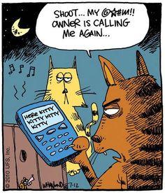Cat Humor: Here kitty kitty