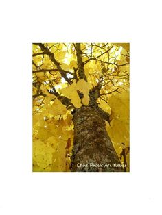 Poster 80x60cm à partir d'une photographie de Céline Photos Art Nature d'un arbre en automne. : Photos par celinephotosartnature Celine, Posters, Nature, Photos, Painting, Etsy, Art, Fall Season, Photography