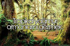 Tropikal yağmur ormanlarını gezmek.
