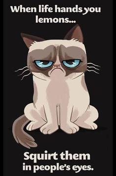 Grumpy cat quotes, grouchy quotes, grumpy cat jokes, grumpy cat humor, grumpy cat pictures