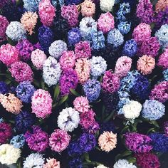 Lavender, lilac, pink, purple.
