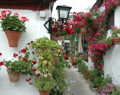 Los Patios De Córdoba   Fúgate