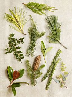 A Greens Glossary   All greens—but especially spruces and broadleaf evergreens like holly—stay fresh longer in a cool room.