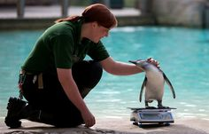 From the smallest to the tallest, zoo animals weigh in (Andrew Cowie / AFP - Getty Images)