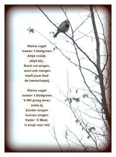 Kleine vogel tussen 't bladgroen.. Gedichten http://www.gedichtensite.nl. Afbeeldingen met gedichten: http://www.fotogedichten.nl
