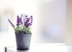 Lavender is simple, elegant and good for your health! I am hopefully going to plant this in the front of my house this spring.