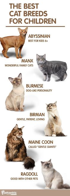 Find the purrfect addition to your family with one of these variety of cat breeds. From Burmese to Birman and Maine Coone to Manx, finding the next pawesome member of your family is just a click away. If you have children, discover PetCentric.coms list o