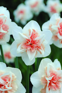 Mr Plant Geek picks 9 exciting spring bulbs for you to grow! – Michael Perry – Mr Plant Geek