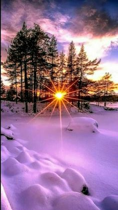Nature, snow, winter, sun