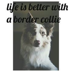 #bordercollie  life is better with a border collie #madebyme