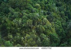 Dark green jungle trees aerial treetop view