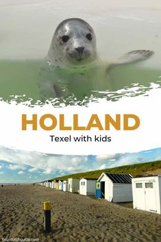 Texel with kids. Travel to The Netherlands with kids and visit Texel. Go and see seals at Ecomare, eat fresh ice creams and spends days at the beach. Best Swimming, Indoor Swimming Pools, Beautiful Islands, Beautiful Beaches, Travel With Kids, Family Travel, Palm Springs Resorts, Florida Pool, Pretty Beach