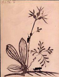PICASSO Pablo  Plantes et insectes