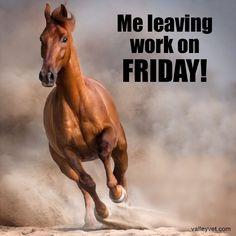#HappyFriday #ValleyVetSupply #HorseLove