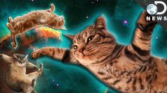 What The Heck Are These Cats Doing In Zero-G?!