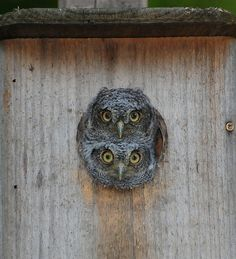 build an owl house outdoor ideas Pinterest Pictures Owl
