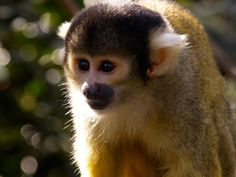 Tell Vietnam Airlines to Stop Transporting Primates for Laboratory Testing - ForceChange