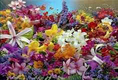 A Collage of Floral Colors - Flickr - Photo Sharing!