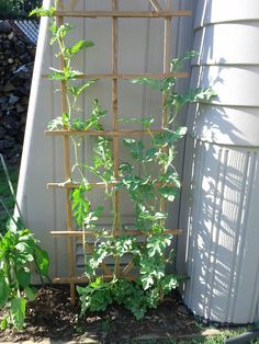 7 Top Ideas For Your Vertical Vegetable Garden Watermelon Vines, Watermelon Plant, How To Grow Watermelon, Bamboo Trellis, Vine Trellis, Garden Trellis, Privacy Trellis, Bean Trellis, Obelisk Trellis