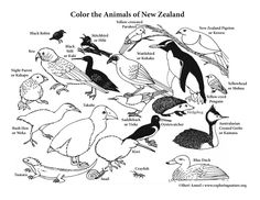 New Zealand Animals Coloring Page
