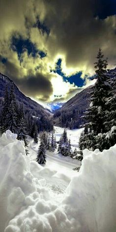 Gifford Pinchot National Forest Winter
