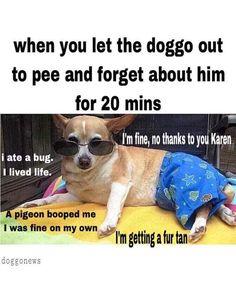 69 Best Karen Memes Images In 2019 Funny Stuff Funny Things