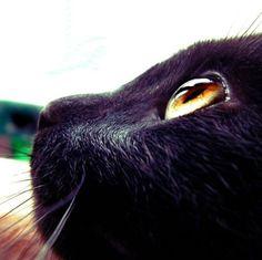 Black cat, Cat, Closeup