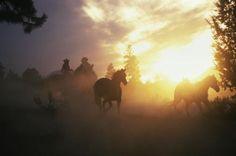 Cowboy and Horses at Dusk