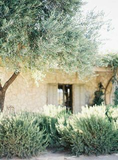 Olive Garden Design and Landscaping . Luxury Olive Garden Design and Landscaping . Mediterranean Landscaping Olive Trees Lavender and Planter Olivier, Olivier En Pot, Landscape Design, Garden Design, Comment Planter, Baumgarten, Olive Tree, Garden Trees, Garden Pots