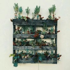 Pallet easily becomes a wall planter for the succulents