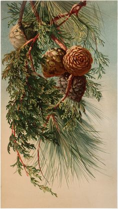 Nostalgic Winter Pine Branch Botanical Graphic