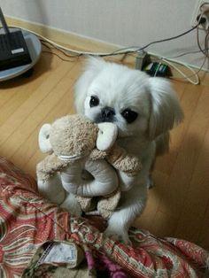 Little Monkey with a Monkey. 🐒