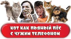 Кот как пьяный пёс с чужим телефоном - Итоги недели