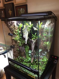 Hottest Free of Charge Reptile Terrarium gecko Concepts No doubt this which has a animal would bring uncounted joy in order to a persons life. If a lot of people thin. Reptile Habitat, Reptile Room, Reptile Cage, Varadero, Crested Gecko Vivarium, Crested Gecko Habitat, Tarantula Enclosure, Snake Enclosure, Pet Tarantula
