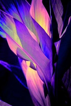 This is an edit of a large tropical plant with variegated leaves.