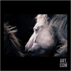 White Horse Photographic Print by MakiEni's photo at Art.com