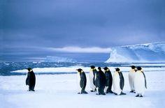 Pby (F1 Online) - Kaiser-Pinguin, Antarktis, Dawson-Lambton Glacier - Foto-Kunstdruck