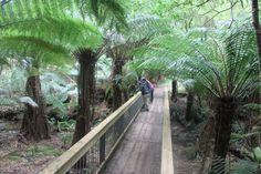 Melba Gully - Rainforest Walk Apollo Bay, Australia Travel, Bucket, Victoria, Plants, Australia Destinations, Plant, Buckets, Aquarius