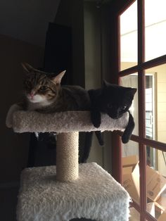Nyx and her friend