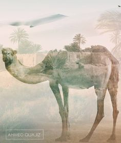 #art #design #double_exposure #desert #camel #nature...