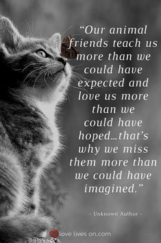 best sympathy quotes animals cats, pet grief и pet loss I Love Cats, Crazy Cats, Cute Cats, Funny Cats, Pretty Cats, Pet Loss Grief, Loss Of Pet, Pet Remembrance, Amor Animal