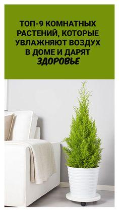 Garden Plants, Indoor Plants, Garden Design, House Design, Flylady, Flat Design, Houseplants, Improve Yourself, Life Hacks