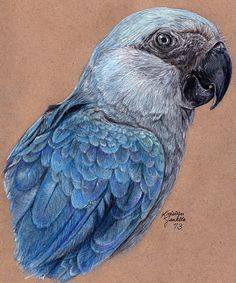 Losing Altitude - Spix's Macaw by KristynJanelle on deviantART