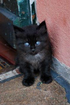 black kitten 1 by ~martap84 on deviantART