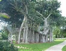 Magnetic Island - Bing Images Weird Trees, Growing Tree, Bing Images, Picnic, Outdoor Structures, Island, Amazing, Plants, Gardens