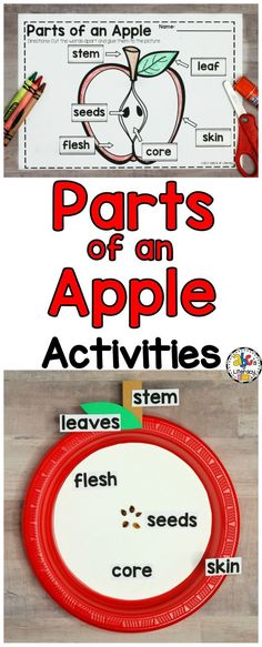 This packet of Parts of an Apple Activities is full of resources to help you teach and your students learn all about apple parts. There are hands-on activities including a parts of an apple reader, interactive notebook, cut and paste, fill in the blank, and directions to make an parts of an apple craft. There are also parts of an apple resources including colorful posters and word wall cards with real-life pictures for you to hang in your classroom. Click on the picture to learn more!