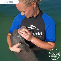 Adorable! A member of SeaWorld's Animal Care Team bottle feeds this orphaned baby manatee with a special nutrient-rich formula that promotes weight gain. #365DaysOfRescue