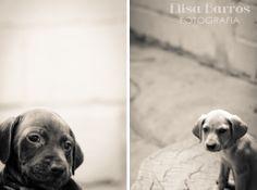 Fotografia:Cão viver