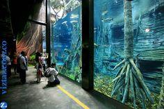 ACUARIO PARQUE EXPLORA Más de 400 especies y 4.000 ejemplares, entre peces, anfibios, reptiles y artrópodos de aguas dulces y saladas de Colombia, llenan de vida las 25 peceras que acompañan todo el recorrido por el Acuario, una de las mayores atracciones no sólo del Parque Explora, sino de Medellín. Una selva inundada con las especies propias de la selva amazónica llama la atención de los visitantes; los caballitos de mar despiertan admiración, e igual sentimiento se ...