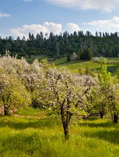 Starfield Vineyards 2740 Jaquier Road, Placerville 530-622-5424.  Expected to open the winery and tasting room in 2018. https://starfieldvineyards.com/story/placerville-property.html